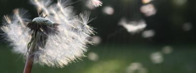 Síntomas Alergia Primaveral